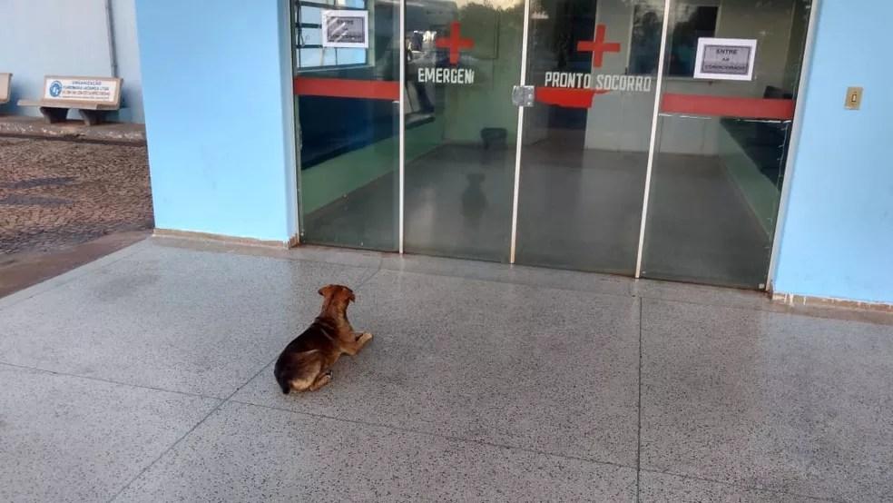 Cachorro passa noite na porta de hospital após dono ser internado em Iacanga (SP) — Foto: Arquivo pessoal/Sérgio da Matta