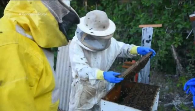 Pesquisa mostra que presença de abelhas pode aumentar a produção do café em Rondônia  — Foto: Reprodução/Rede Amazônica