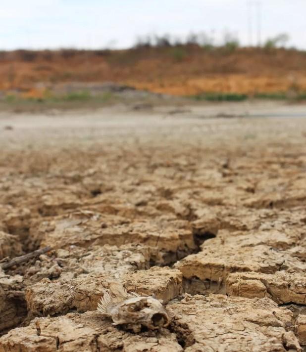 Leito rachado e peixes mortos. Este é o cenário do Açude Rio da Pedra, reservatório que abastece Santana do Matos (Foto: Anderson Barbosa/G1)