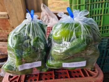 Pimentões analisados pela Idaron durante investigações sobre uso de agrotóxico ilegal em Vilhena (RO) — Foto: SirLey Ávila/Idaron