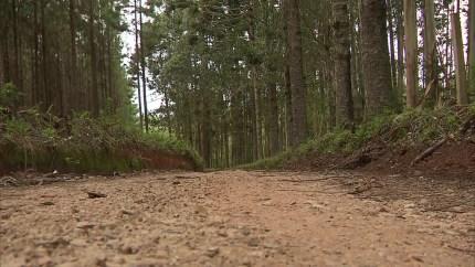 Corpo foi encontrado próximo a estrada rural na cidade de São José dos Pinhais — Foto: Reprodução/RPC