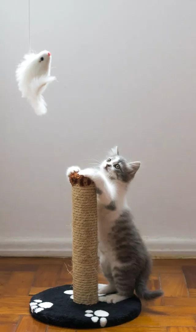 Muitas brincadeiras com gatos têm como base o instinto de caça do animal. O tutor pode estimular isso usando garrafas pet. A tampinha, por exemplo, pode ser jogada para que ele procure por ela ou amarre-a em um barbante, use como isca para o gatinho (Foto: Willian Justen de Vasconcellos / Unsplash / Divulgação)