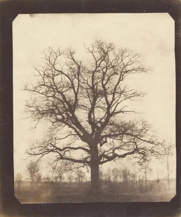 Carvalho no inverno, do pioneiro da fotografia Fox Talbot. Estima-se que a fotografia tenha sido feita entre 1842 e 1843 (Foto: Cortesia/Getty's Open Content Program)