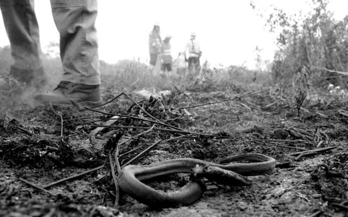 Combate ao fogo no Pantanal de MS — Foto: Chico Ribeiro/ Governo de MS