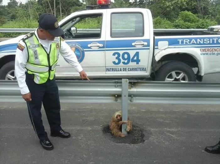 Animal foi retirado do local por agentes da Comissão de Trânsito do Equador (Foto: Reprodução/Facebook/Comisión de Tránsito del Ecuador)