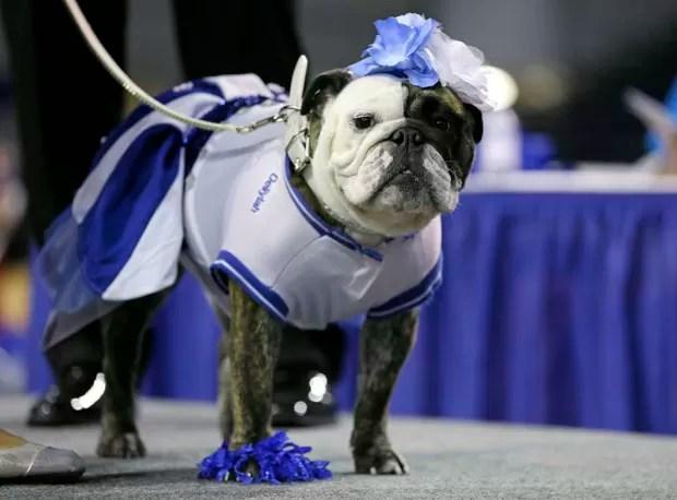 Cachorros participaram de concurso para eleger buldogue mais belo nos EUA (Foto: Charlie Neibergall/AP)