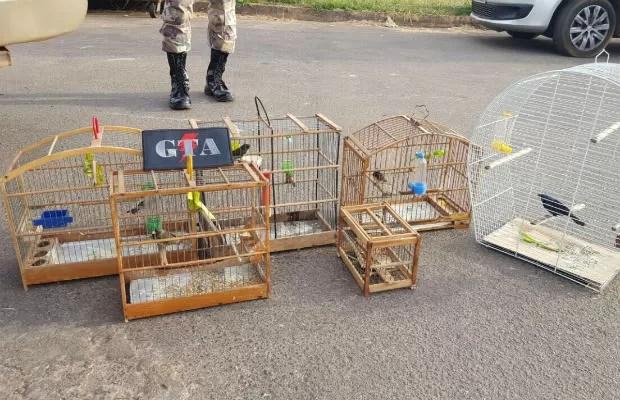 Gaiolas com pássaros silvestres apreendidas nesta quinta (2) em casa de mulher em São Sebastião, no DF (Foto: Polícia Militar/Divulgação)