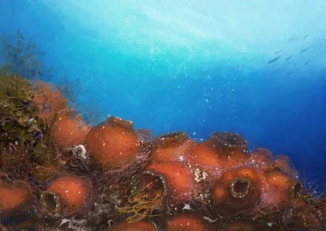 Ilustração digital do Odontonia plurellicola em um hospedeiro do gênero Plurella. (Foto: Franz Anthony)
