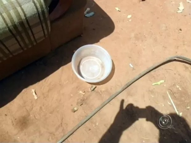 Cachorro morre após ficar amarrado sob o sol em Novo Horizonte (Foto: Reprodução/TV TEM)