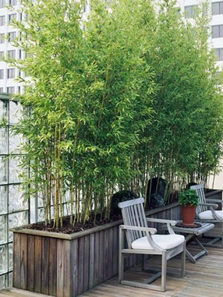 bamboo privacy garden pen's blog: Sun loving container plants for roof garden screen