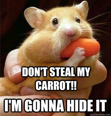 Image result for hamster memes