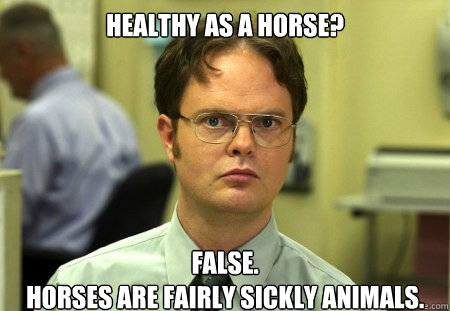 Image result for healthy as a horse meme