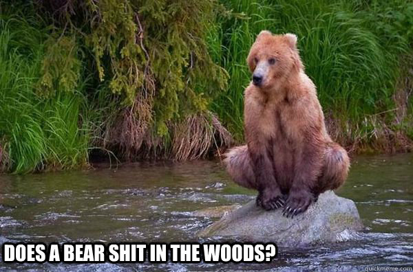 Image result for does a bear shit in the woods meme