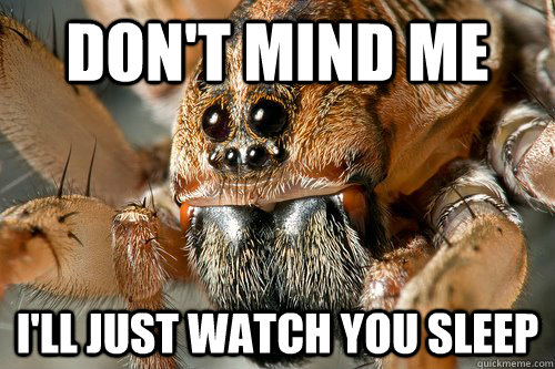 Image result for spider meme