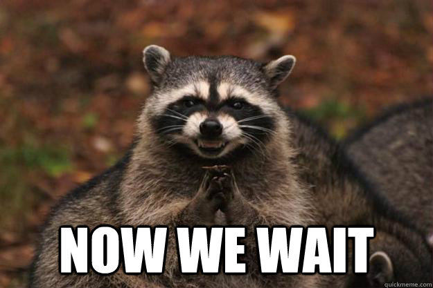 now we wait -  now we wait  Evil Plotting Raccoon