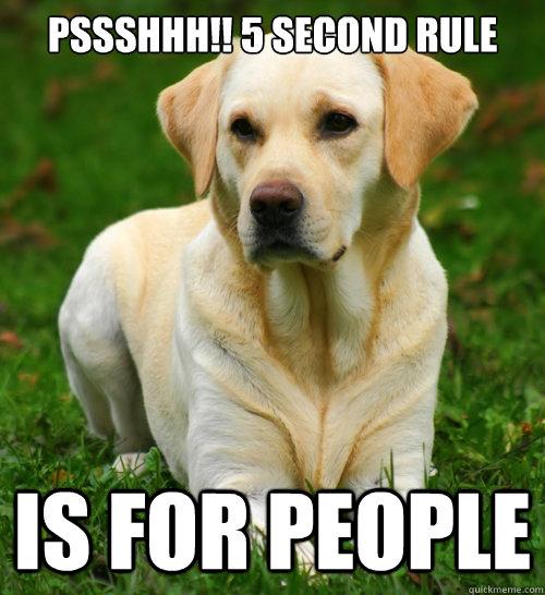 Image result for second rule dog