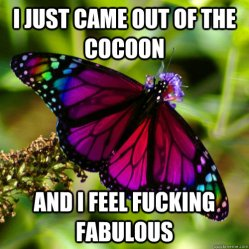 Image result for butterfly cocoon meme