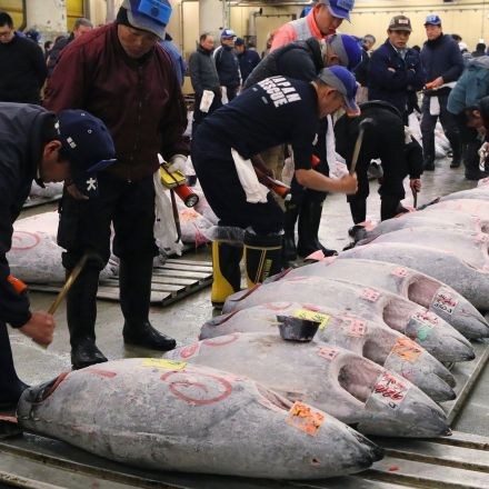 Bluefin tuna sells for £500,000 at Japan auction amid overfishing concerns