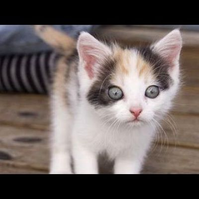 Kittens see / do things for the first time