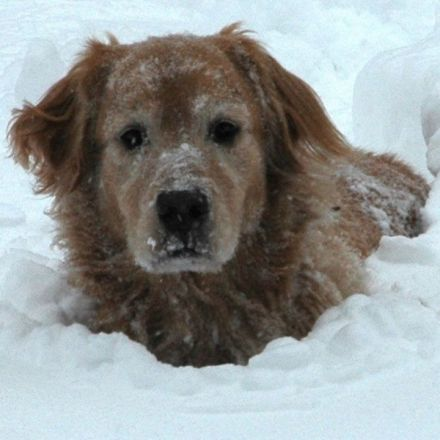 Dog saves life of man injured, paralyzed in snow