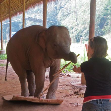 Elephants pass test with 'profound implications' for their intelligence