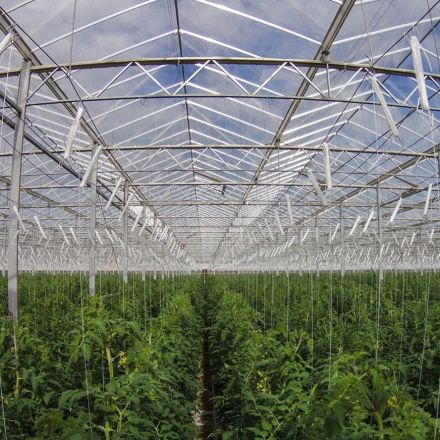 Australian desert farm grows 17,000 metric tons of vegetables with just seawater and sun