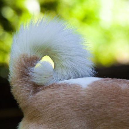 Good news for animal lovers: Congress bans cutting off dog tails
