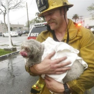 Dog pulled from California fire revived after 20 minutes