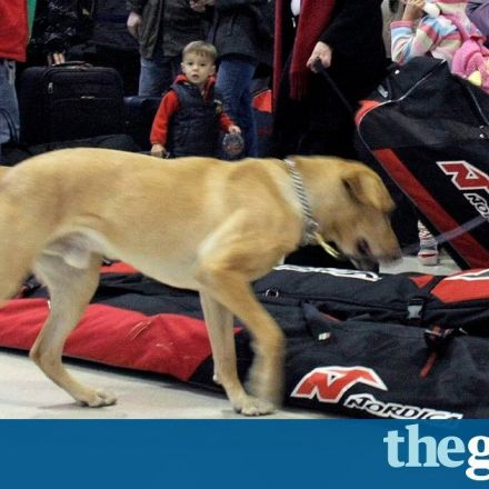 Uproar as bomb-detection dog Grizz shot dead at Auckland airport