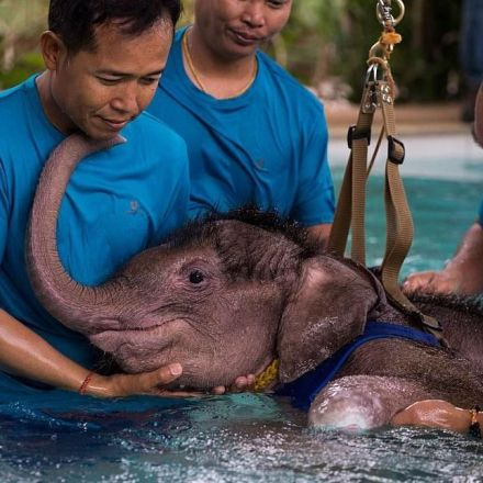 Injured baby elephant receives water therapy to help her walk again