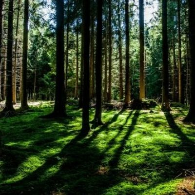 Climate change could kill world's oldest trees