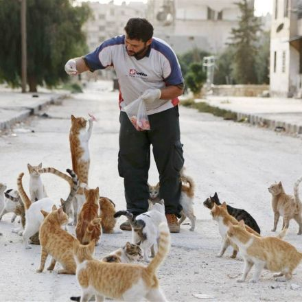 'Cat Man of Aleppo' forced to start over again