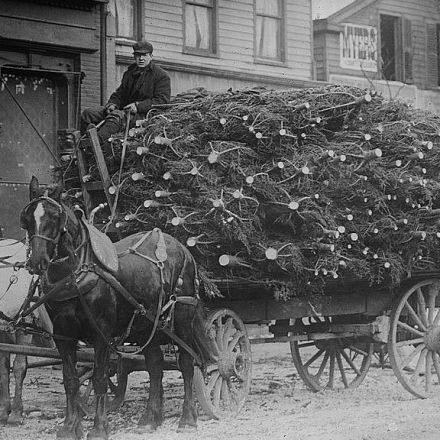 Making Green: The history of New York's Christmas tree market