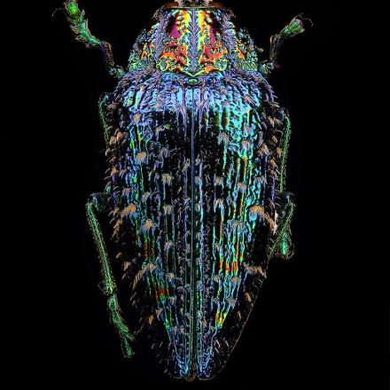 Entomology: Photos by Francesco Bagnato