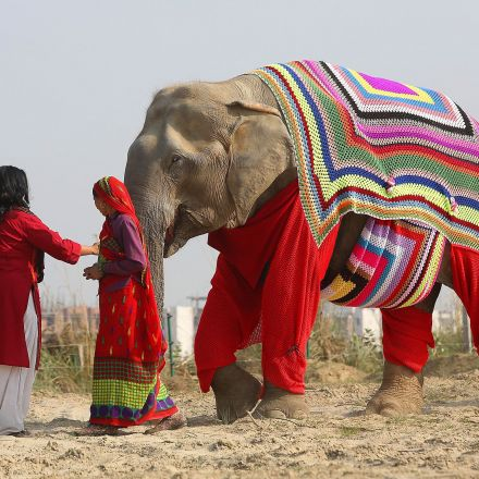Villagers are knitting jumpers for elephants to protect them from near-freezing temperatures