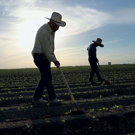 The High Cost of Cheap Labor