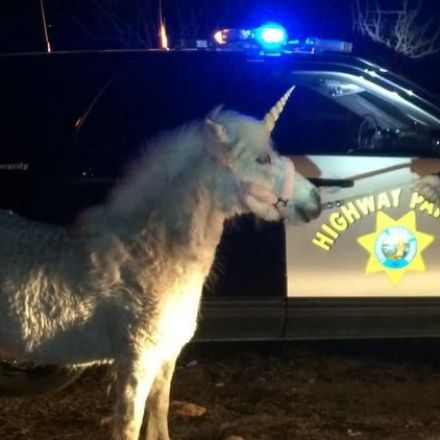 California Highway Patrol needed nearly four hours to catch a runaway 'unicorn'