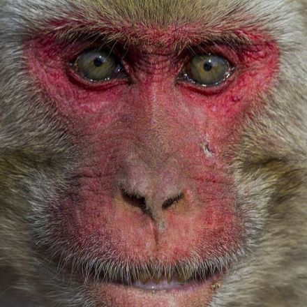 You Probably Shouldn't Be Worried About This Colony of Herpes-Infected Monkeys in Florida