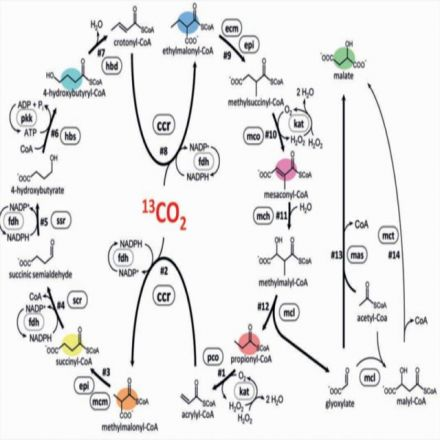 Enzymes from nine organisms combined to create new pathway