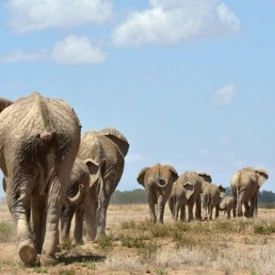 Interpol opens new front in war against wildlife crimes