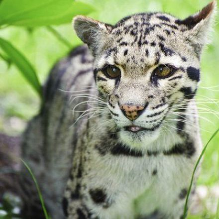 Big Cat Trade From Burma to China Up
