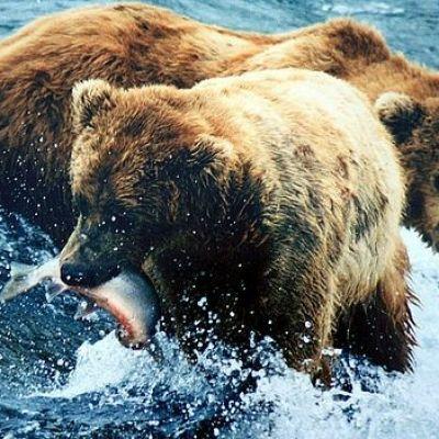 Trump lifts ban on hunting hibernating bears