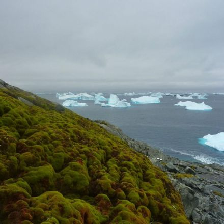 It's so hot that Antarctica is going green, as global warming triggers moss explosion