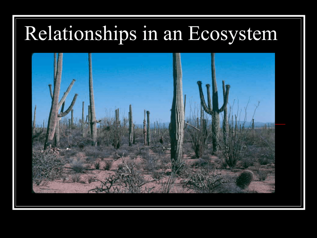 Feeding Relationships Within An Ecosystem