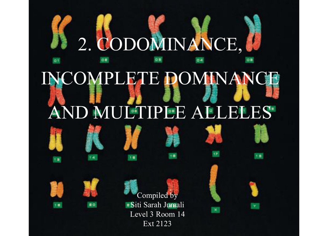 Codominance Incomplete Dominance And Multiple Alleles