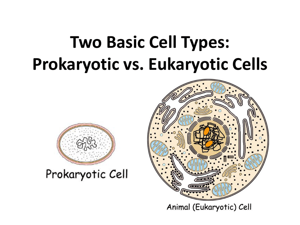 Two Basic Cell Types