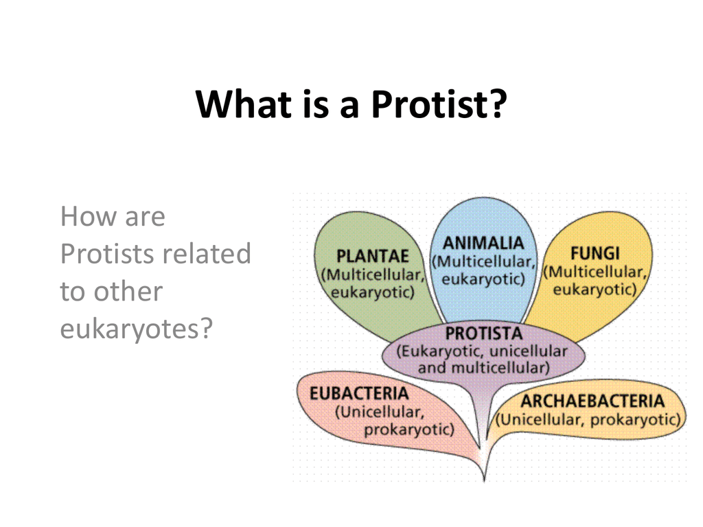 What Is A Protist