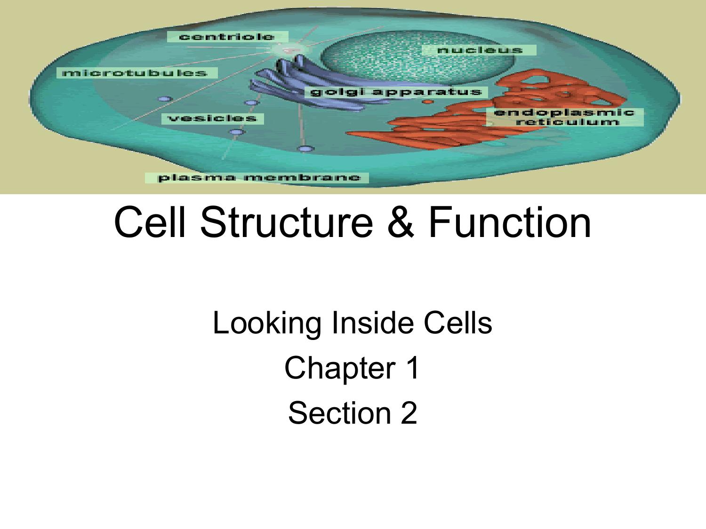 Looking Inside Cells