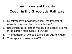 Glycolysis Worksheet