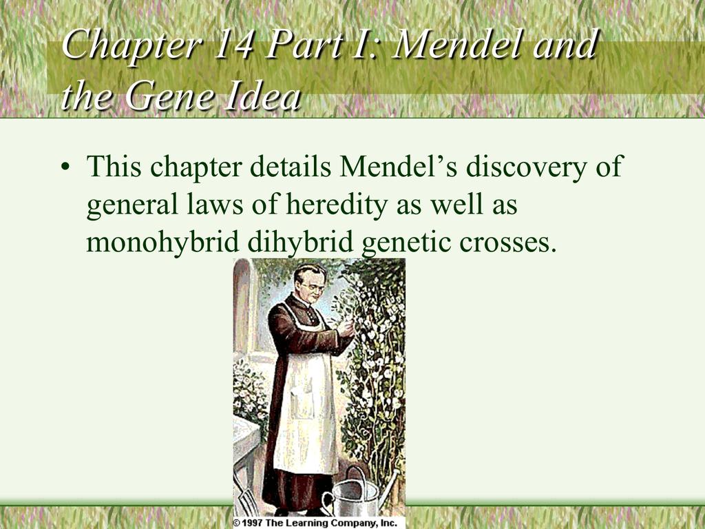 Chapter 11 Mendelian Patterns Of Inheritance